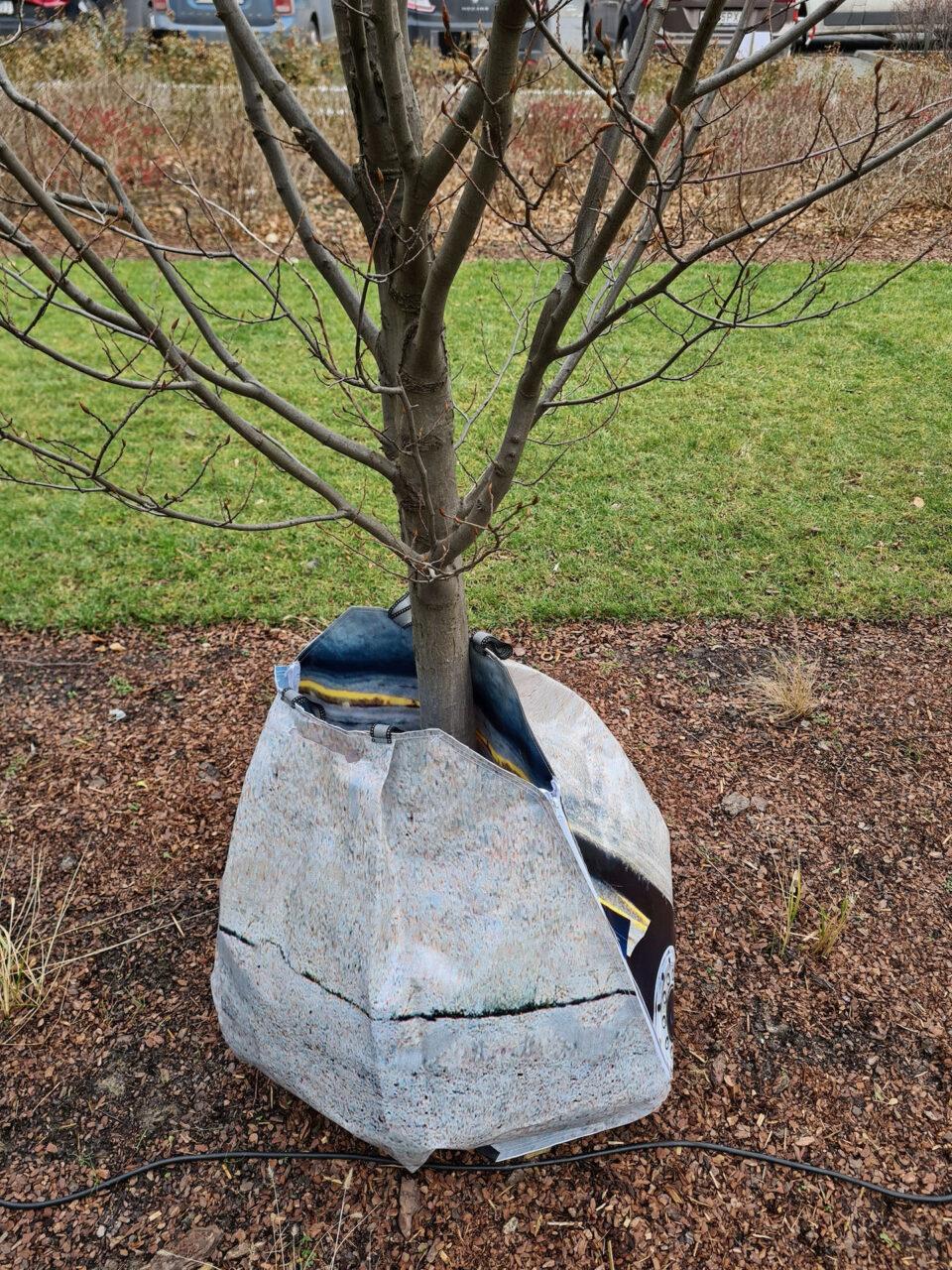 przytul drzewo